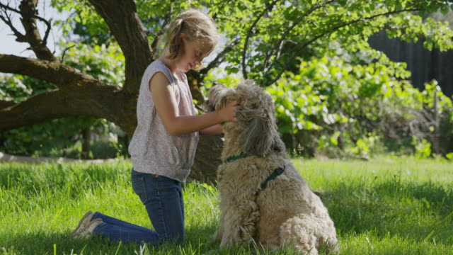 medium panning shot of kneeling girl petting dog in field / springville, utah, united states - springville utah stock-videos und b-roll-filmmaterial
