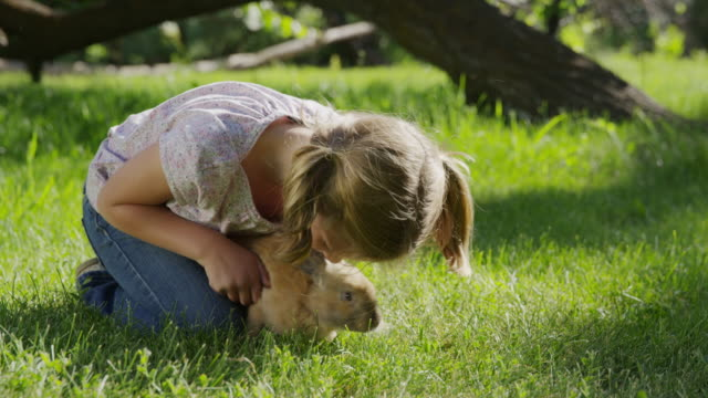 medium panning shot of kneeling girl petting rabbit in field / springville, utah, united states - springville utah stock videos & royalty-free footage