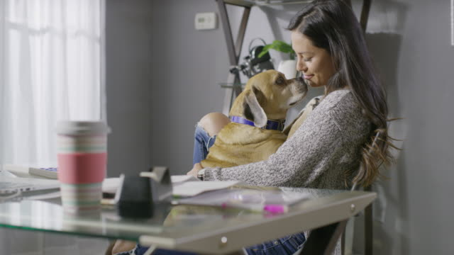 stockvideo's en b-roll-footage met medium panning shot of woman sitting in chair petting dog in lap / cedar hills, utah, united states - alleen één mid volwassen vrouw
