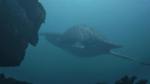 medium pan-right - an underwater sea creature attacks prey near rocks. / los angeles, california, usa - dinosaur stock videos and b-roll footage