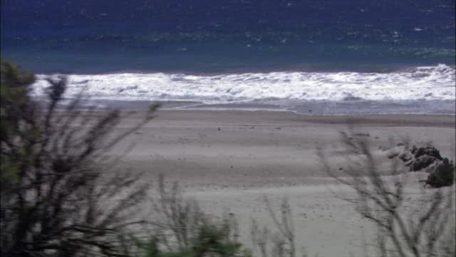 vídeos de stock e filmes b-roll de medium sandpipers standing on beach as tide comes in/ malibu, california - pacífico norte
