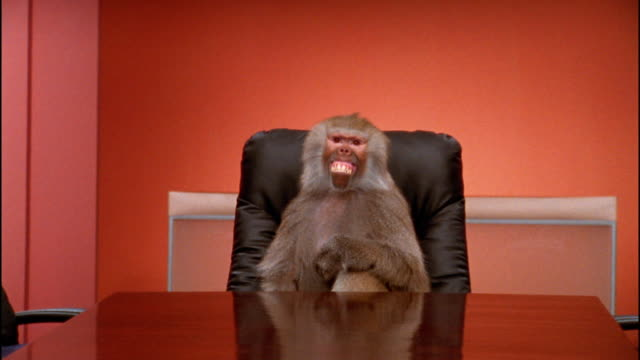 medium shot baboon making faces and rude gestures at conference table - dejaover点の映像素材/bロール