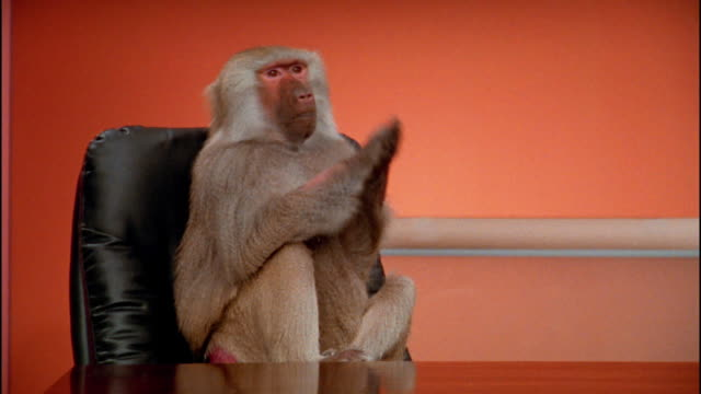 Medium shot baboon sitting at desk clapping paws