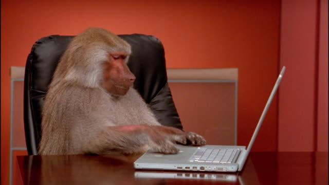 vídeos de stock, filmes e b-roll de medium shot baboon typing on laptop and pushing it away - macaco