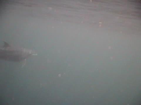 medium shot bottlenose dolphin lots of passing shots in dappled light - dappled light stock videos and b-roll footage