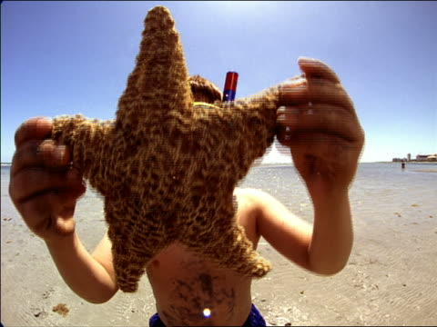 Medium shot boy holds starfish and moves it to reveal smiling face with snorkel gear / Miami, Florida