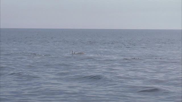 medium shot calm ocean or sea and horizon / world war ii submarine surfacing - 潜水艦点の映像素材/bロール