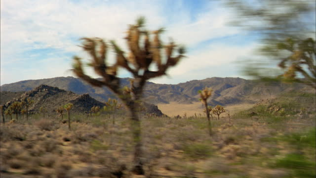 medium shot car point of view passing joshua trees in joshua tree national park / california - joshua tree national park stock videos & royalty-free footage