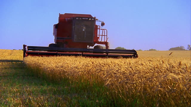 medium shot combine approaching cam - combine harvester stock videos and b-roll footage