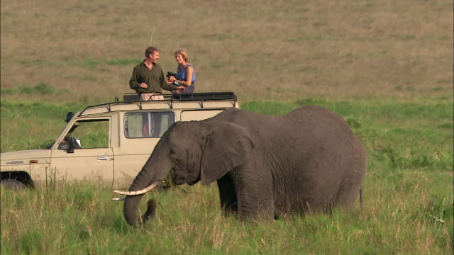 Medium shot couple on safari on top of 4x4 / talking and watching elephant + zebras / Masai Mara, Kenya