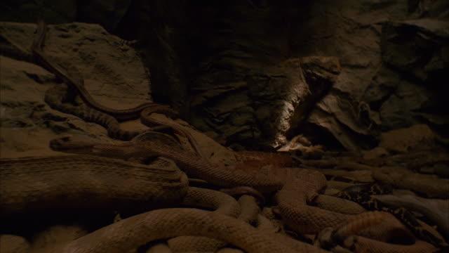 medium shot crane shot snake pit in cave - 1996 stock videos & royalty-free footage