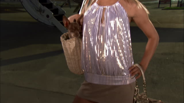 medium shot diva posing and carrying chihuahua in purse near private airplane / long beach, california, usa - pampered dog stock videos and b-roll footage