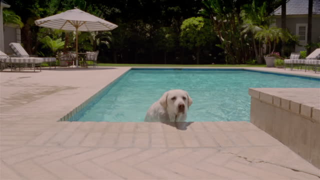 Medium shot dog climbing out of swimming pool and shaking itself dry