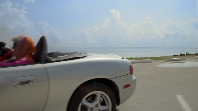 medium shot dolly shot senior woman driving convertible near beach with dog in passenger seat / miami, florida - dog convertible stock videos & royalty-free footage