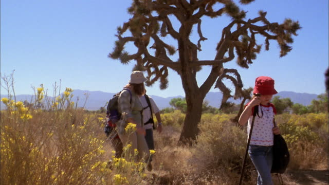 medium shot family w/walking sticks and backpacks hiking on desert park trail w/tree - deserto mojave video stock e b–roll