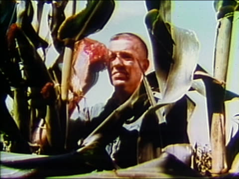 1968 medium shot farmer inspecting tall corn and wiping brow with bandana