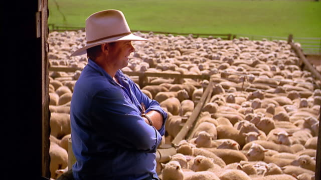 medium shot farmer posing / looking at herd of sheep - ranch stock videos & royalty-free footage