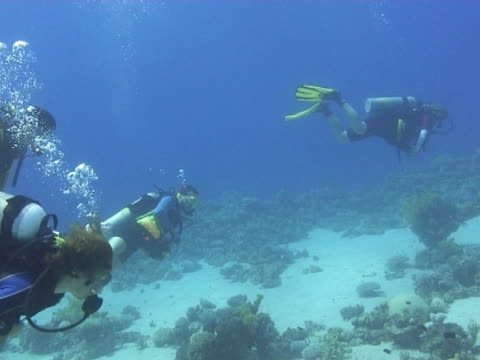 medium shot four divers swimming in lagoon. - tauchgerät stock-videos und b-roll-filmmaterial
