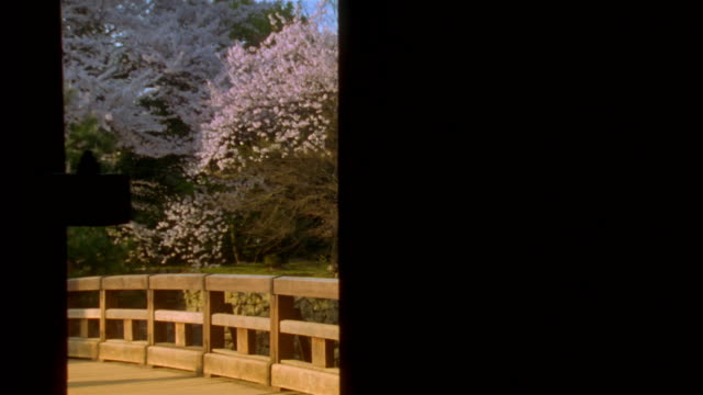 medium shot gate opening to reveal bridge with cherry blossom tree in background / hikone, japan - cherry tree stock videos & royalty-free footage