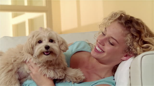 medium shot girl lying on sofa, holding and petting maltese-toy poodle mix - pampered pets stock videos and b-roll footage