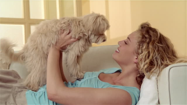 medium shot girl lying on sofa, holding maltese-toy poodle mix on chest and kissing dog - chest kissing stock videos & royalty-free footage