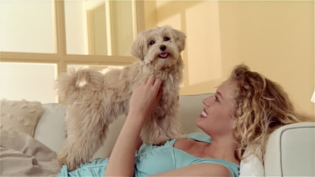 vídeos de stock, filmes e b-roll de medium shot girl lying on sofa, holding maltese-toy poodle mix on chest and petting dog - poodle de brinquedo