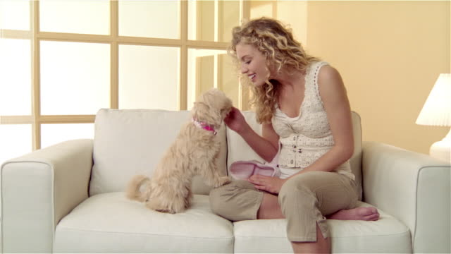 vídeos de stock e filmes b-roll de medium shot girl sitting on sofa with  maltese-toy poodle mix, giving dog a treat and putting outfit on it - biscoito de cachorro
