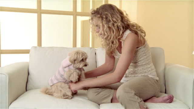 vídeos de stock, filmes e b-roll de medium shot girl sitting on sofa with  maltese-toy poodle mix, putting outfit on dog, giving it a treat and, and hugging it - biscoito de cachorro