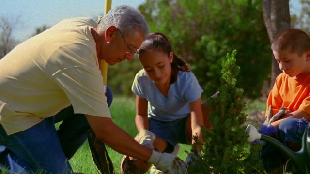 Medium shot Hispanic man planting bush with girl and boy outdoors / New Mexico