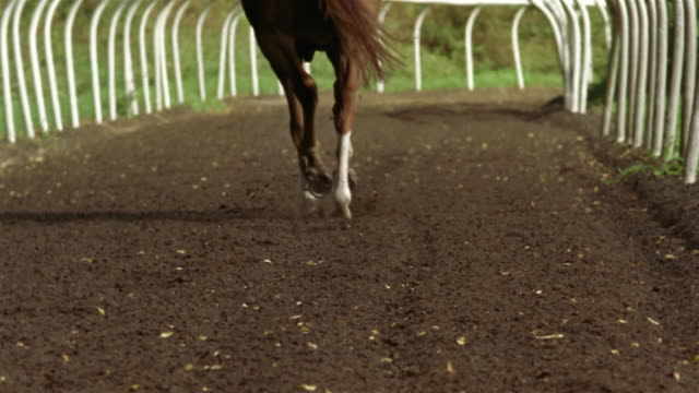 medium shot horse's hooves running on dirt track away from camera/ tilt up jockey riding horse/ berkshire, england - see other clips from this shoot 997 stock videos and b-roll footage