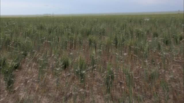 medium shot - locust swarm over vast field / australia - swarm of insects stock videos & royalty-free footage