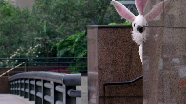 vidéos et rushes de medium shot man in rabbit costume peeking from around building corner / los angeles, ca - lapin
