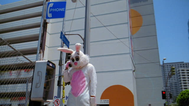 medium shot man in rabbit costume talking and gesturing on public pay telephone with building in background / l.a. - rabbit costume stock videos & royalty-free footage