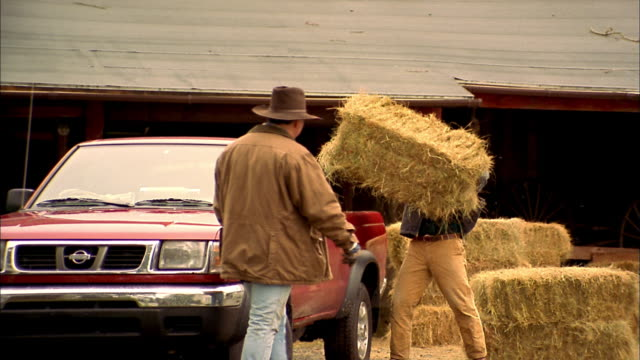 medium shot man lifting stack of hay and putting into pickup truck / man wearing hat + walking over + helping - fieno video stock e b–roll
