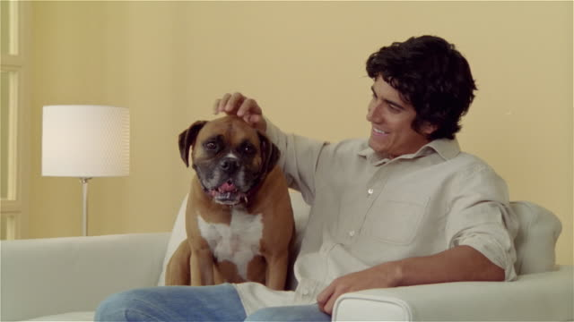 medium shot man sitting on sofa, petting boxer - pampered pets stock videos and b-roll footage