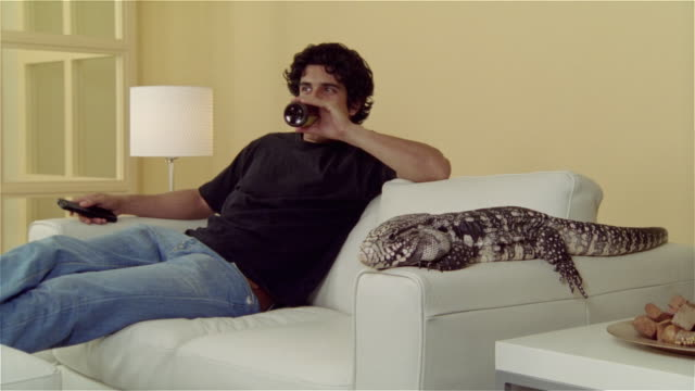 Medium shot man watching TV on sofa with Tegu lizard