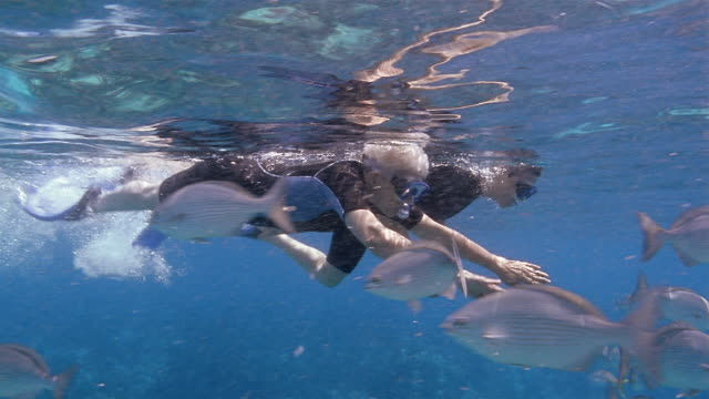 medium shot mature couple snorkeling alongside school of fish - 60 64 years stock videos & royalty-free footage