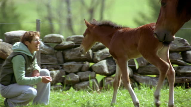 medium shot mother horse and foal walking across field / woman smiling + petting foal - one mature woman only stock videos & royalty-free footage
