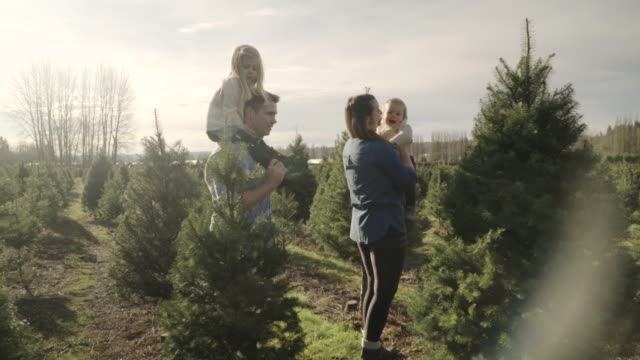 medium shot of a family walking at a tree farm - pinaceae stock videos & royalty-free footage