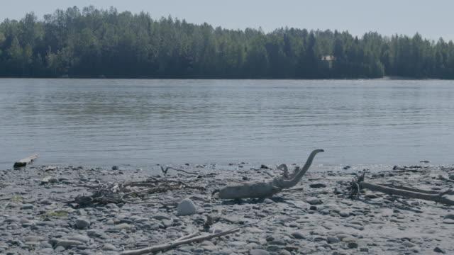 stockvideo's en b-roll-footage met medium shot of a lake in trapper creek - drijfhout