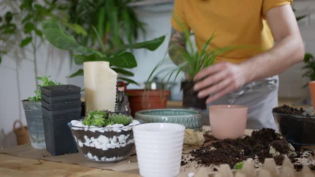 medium skott av en man som planterar en krukväxt hemma - botanik bildbanksvideor och videomaterial från bakom kulisserna