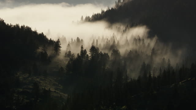 medium shot of a misty valley in the yellowstone national park at sunrise - pine stock videos & royalty-free footage