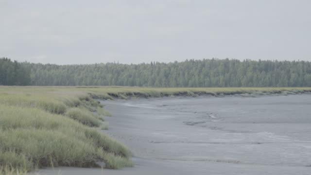 medium shot of a mud flat next to a grass field - mud flat stock videos and b-roll footage