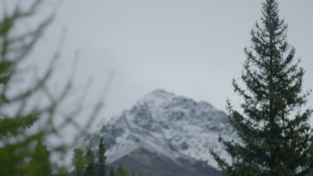 Medium shot of a pine tree with a snow capped mountain in the background