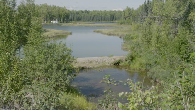 Medium shot of a pond in a forest clearing in Trapper Creek