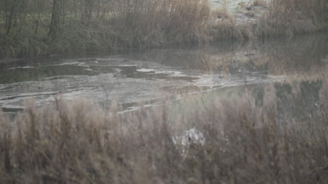 medium shot of a pond in wharram percy - reed grass family stock videos & royalty-free footage
