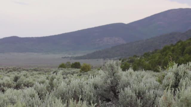 medium shot of a sage field in arizona - セージブラッシュ点の映像素材/bロール