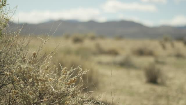 Medium shot of a tumbleweed at Nevada Test Site