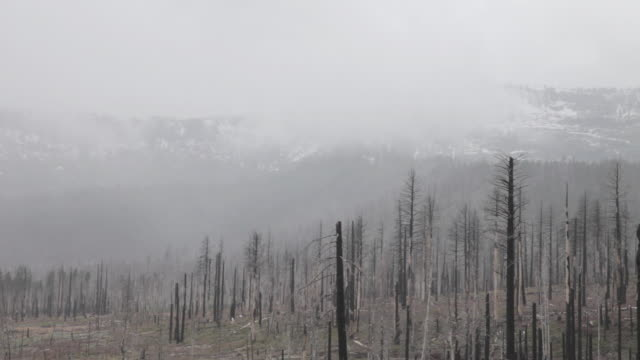 Medium Shot of an area devasted by a forest fire