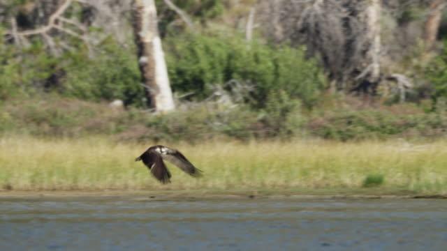 vídeos de stock e filmes b-roll de medium shot of bird flying above lake / redfish lake, idaho, united states - fotografia de três quartos